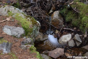 Babbling Brook- Schoodic Point, ME