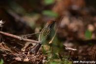 Sparrow- Windham, NH