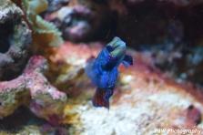 Colorful Fish- New England Aquarium