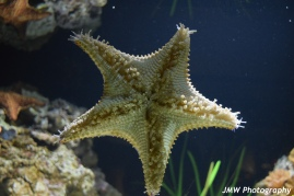 Starfish- New England Aquarium