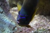 Close Up- New England Aquarium