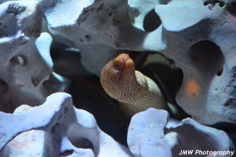 Leopard Eel- Boston Aquarium