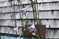 Flowers- Trenton, ME