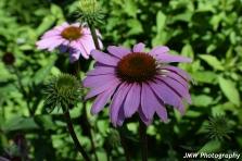 Flower- Somesville, ME