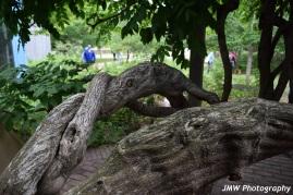 Intertwined- Jordan Pond House ME