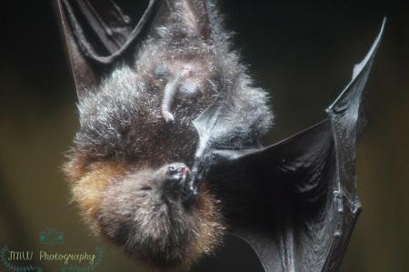 JMW Bat 2