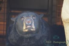 JMW Bear CloseUp