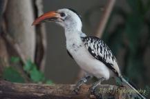 JMW Bird