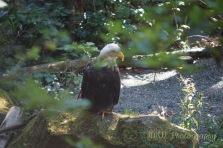 JMW Eagle