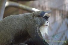 JMW Monkey 3