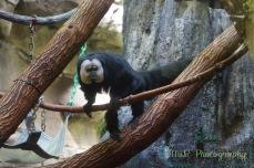 JMW Monkey x