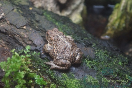 JMW Toad