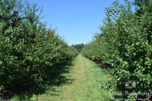 Orchard- Londonderry, NH