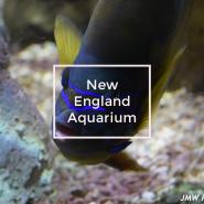 NE Aquarium