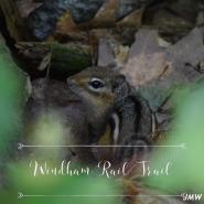 Windham Rail Trail