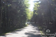 CarriageRoad