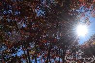 Sun Beams- Acadia National Park