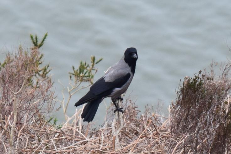 Raven-B012