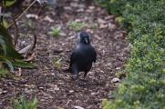 Raven-B013
