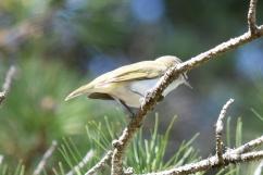 Bird-B021