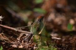 Sparrow-B042