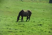 Horse-M032